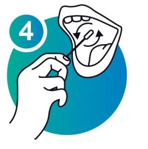 NorthGene Sampling Procedure Icon 4